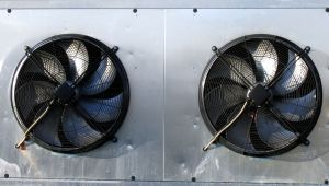 1150464_two_fans