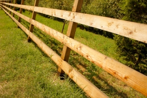 1363076_wood_fence_in_nature_1